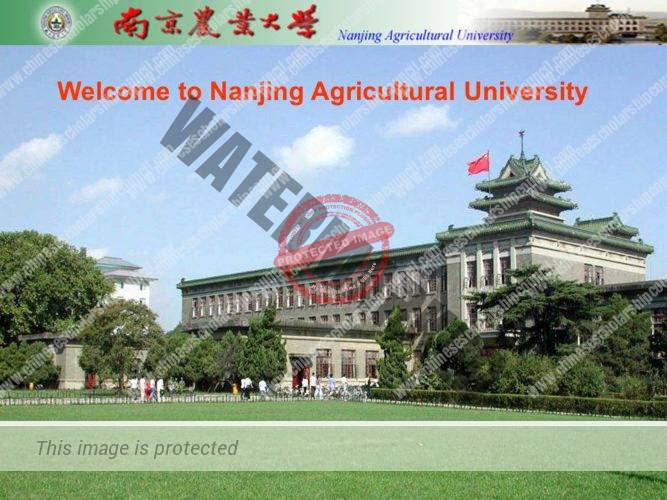 Nanjing Agricultural University Scholarship